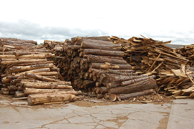 Kiln Dried Hardwood Logs in Bristol